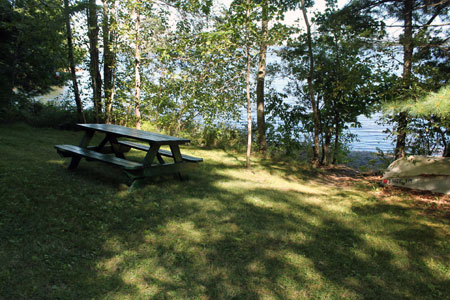 Enjoy a quiet picnic nestled into the birches